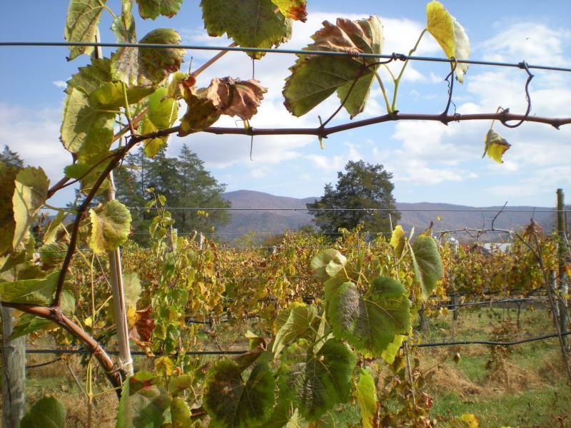 Wisteria Farm & Vineyard 3